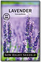 Sow Right Seeds - Lavender Seeds for Planting; Non-GMO Heirloom Seeds with Instructions to Plant and Grow a Beautiful Indo...