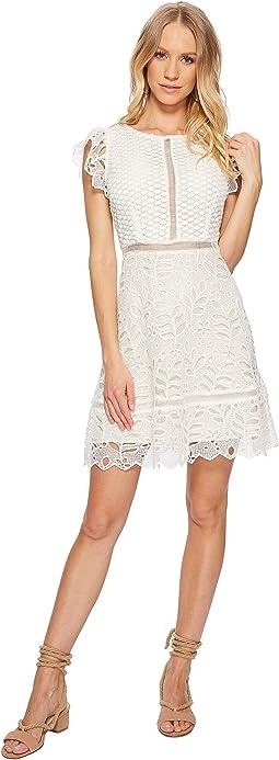 BB Dakota - Ariane Lace Fit and Flare Dress
