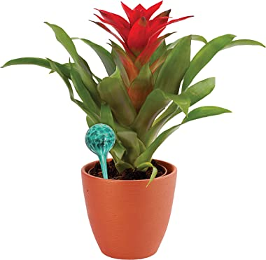 Maxam Wyndham House, 4 Piece Watering Globe Set, Colorful Hand-Blown Glass Plant Watering System