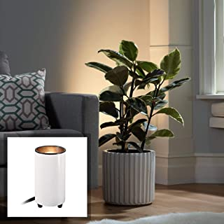 Best can accent light Reviews