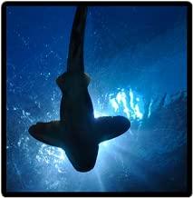 Marine Biologist Flashcards