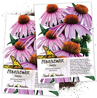 Seed Needs, Purple Coneflower (Echinacea purpurea) Twin Pack of 500 Seeds Each
