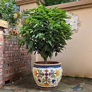 Kotee Färgglada blomkrukor, stor färgad keramisk växtkruka handgjorda staty, växtbehållare inomhus utomhus användning bons...