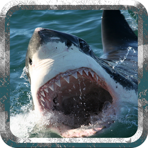Angry Shark - Wild Attack