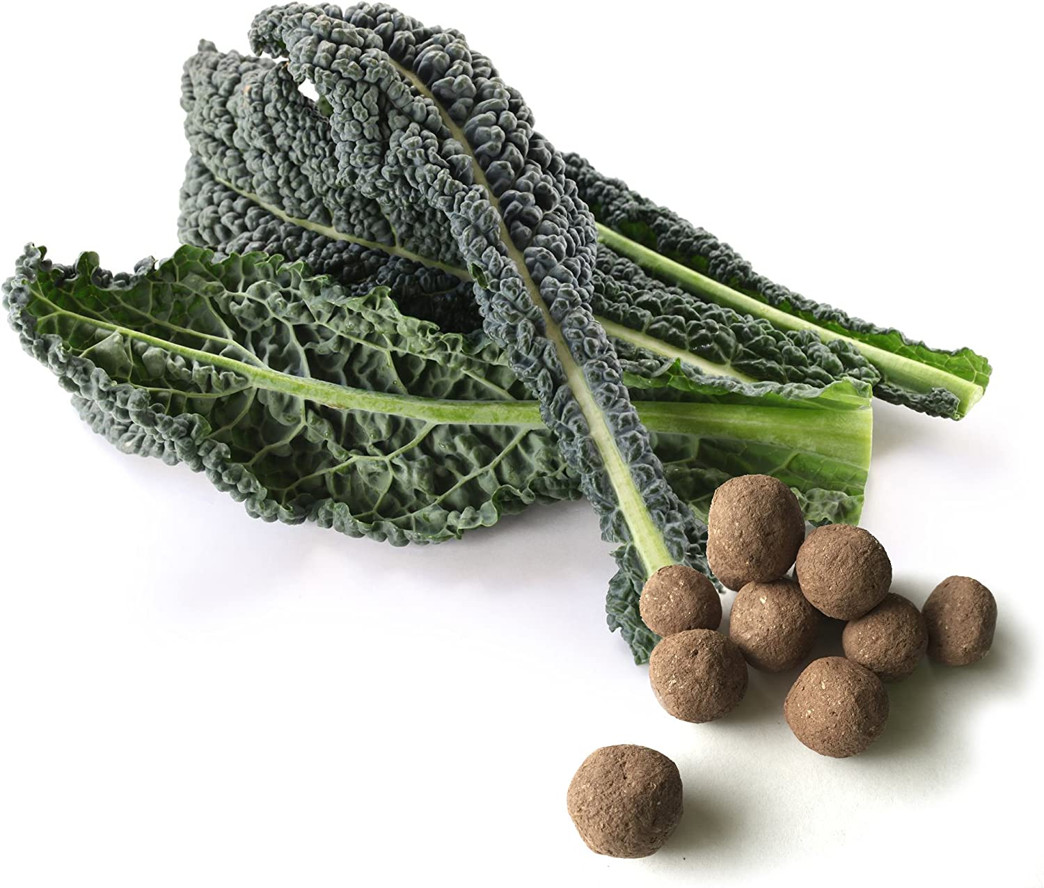 20 Mixed Kale Super sale period limited Seed Balls Dinosaur Red Herb Soldering - Russian Vegeta