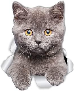 Winston & Bear British Shorthair Cat Wall Decals - 2 Pack - British Shorthair Cat Toilet Sticker – 3D Cat Car Window and Bumper Sticker - Retail Packaged Grey Kitten Lover Gifts
