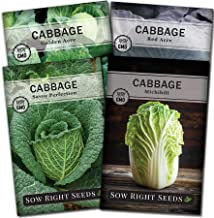 Sow Right Seeds - Cabbage Seed Collection for Planting - Savoy Perfection, Red Acre, Golden Acre, and Michihili (Nampa) Ca...