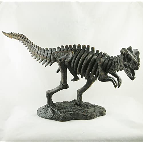 Dinosaur Skeleton: Amazon co uk