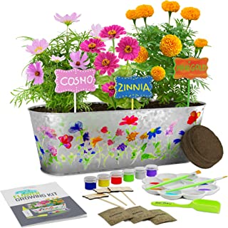 Dan&Darci Paint & Plant Flower Growing Kit - Grow Cosmos, Zinnia, Marigold Flowers - Includes Everything Needed to Paint and Grow - Great Gift for Children STEM
