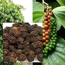 New!! 20 Seeds Piper nigrum Seeds Black Pepper Heirloom Seeds Food herb Thailand