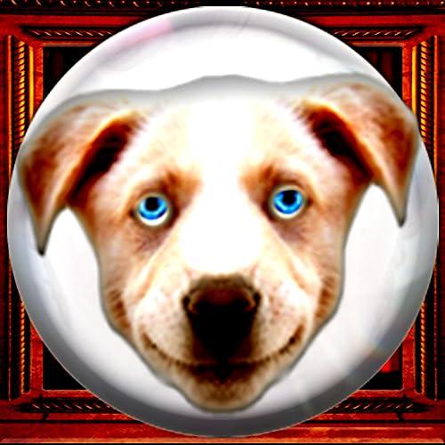 Fortune Teller Crystal Ball - Lite