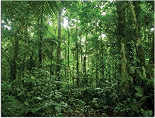JP London Solvent Free Art Print PAP2360 Ready to Frame Poster Rainforest Woods Forest Trees at 18