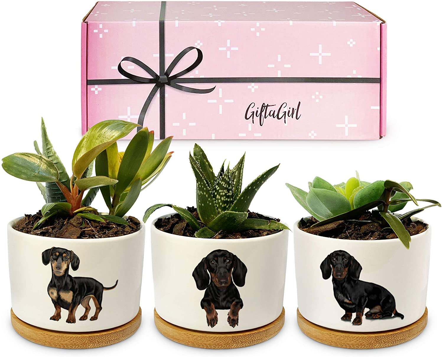 GIFTAGIRL Dachshund Gifts for Women or Weiner Dog Gifts for Women - Our Succulent Pots Make Great Daschund Gifts for Women. They Love Their Wiener Dog Gifts
