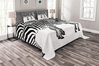 Ambesonne Safari Bedspread, Zebras Animals Skin Print with Stripes Jungle Wildlife Picture Artwork, Decorative Quilted 3 Piece Coverlet Set with 2 Pillow Shams, King Size, White Charcoal