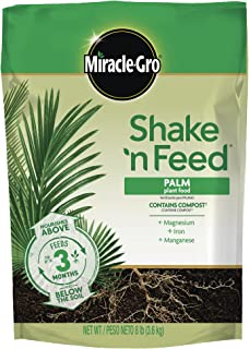 Best date palm small plant Reviews