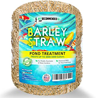 Vet Recommended Barley Straw for Fish Ponds and Fountain (16 Oz). Treats up to 3000 to 5000 Gallons, 100% Safe & Natural Pond Cleaner. Keeps Your Water Garden Clean & Fresh. Made in USA