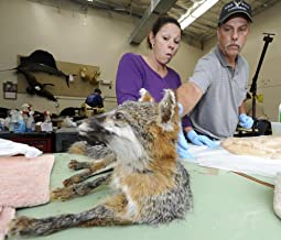 Taxidermy Service Start Up Sample Business Plan!
