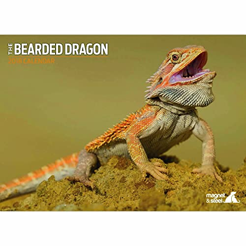 Bearded Dragon Accessories: Amazon co uk