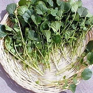 Upland Cress Garden Seeds - 1 Oz - Non-GMO, Heirloom Vegetable Gardening & Microgreens Seeds