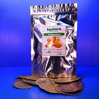 Aquarium Equip 50Pcs 4~7 Tantora Catappa Leaves Grd A Indian Almond Leaf Ketapang Shrimp Fish