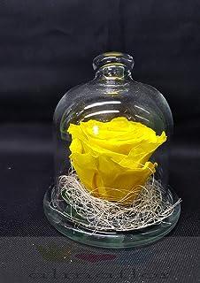 Gratis TU ENV/ÍO Rosas eternas Naturales con Cabeza 6 cm Rosa eterna Amarilla Rosa preservada Amarilla. presentaci/ón en Tubo de conservaci/ón