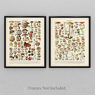 Vintage French Mushrooms - Set of Two - 11x14 Unframed Art Print - Perfect Kitchen, Living Room and Restaurant Decor and Gift Under $20