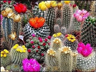 cactus planting medium