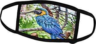 3dRose Face Mask Small, blue and gold macaw with ruffled feathers bird