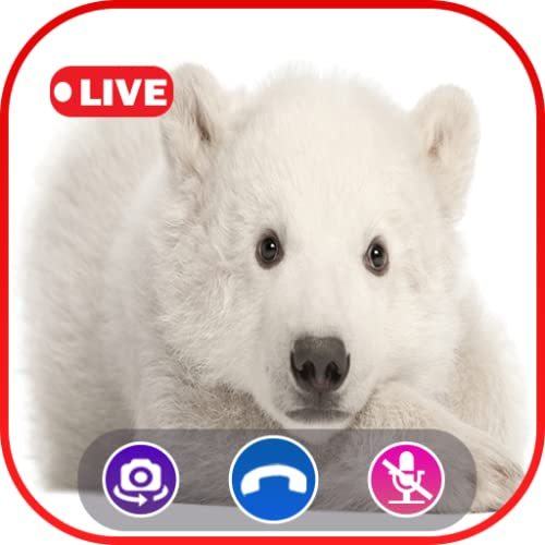 Call Video Polar bear Simulator - Prank Call Apps