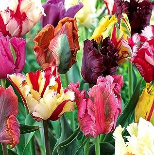 Mixed Parrot Tulips - 10 bulbs