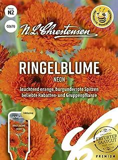 Ringelblume Neon, leuchtend orange, burgunderrote Spitzen, bienenfreundlich, Samen