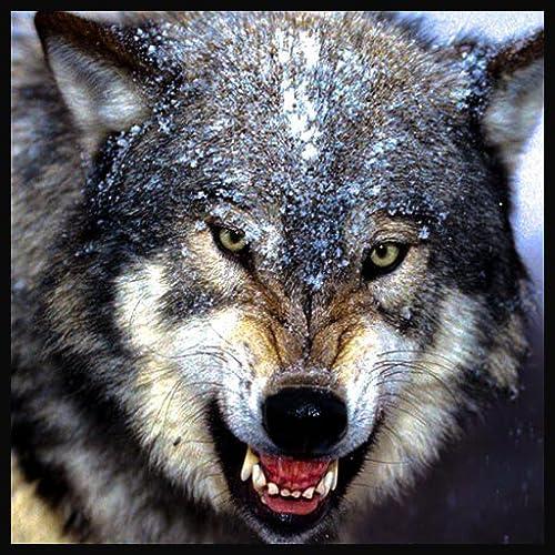Wild Wolf Sim City Attack 3D