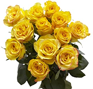 GlobalRose Yellow Roses - Fresh Flower Delivery- 50 Long Stems