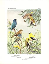 "1926 Vintage TODHUNTER BIRDS /""GOLDFINCH/"" LOVELY 90 YEARS OLD Color Lithograph"