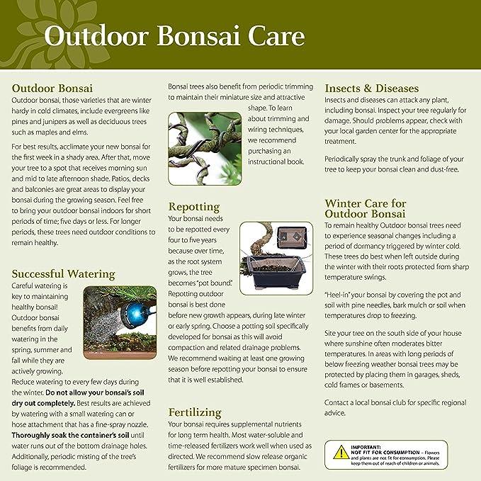 Amazon Com Brussel S Bonsai Professional Blend Soil 2 Qt Garden Outdoor