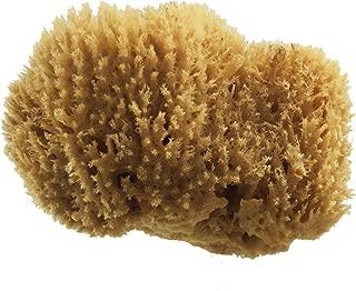 PanHy Natural Sea Grass Sponge 5-6