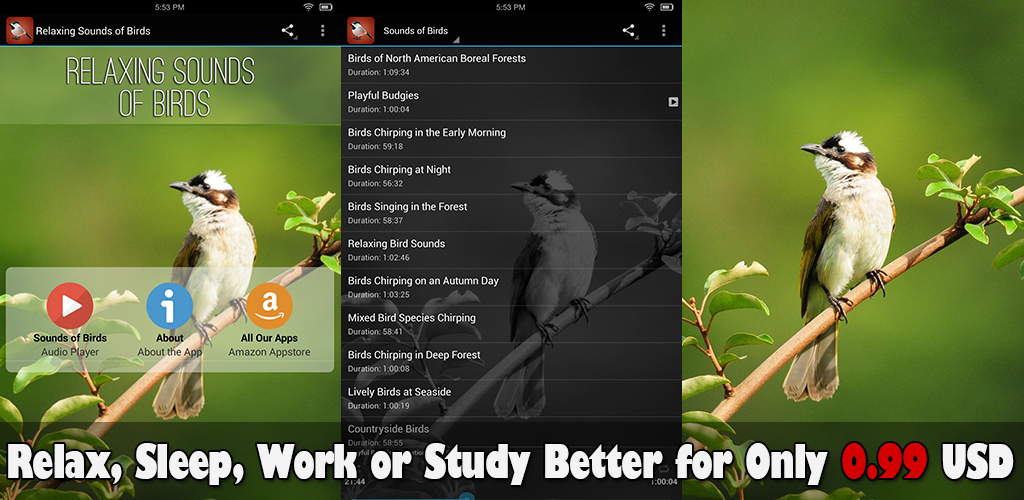 Relaxing Sounds of Birds: Best for Relaxation, Sleep, Meditation, Yoga, and Studying