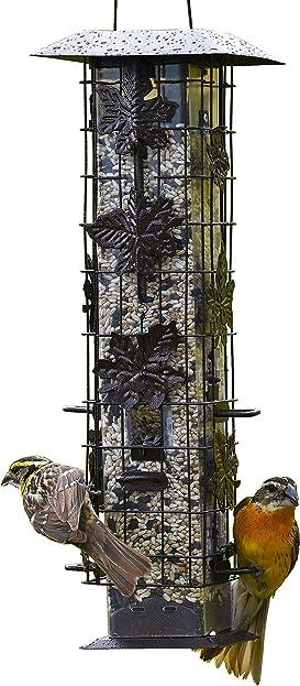 Explore feeders for birds