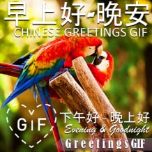 Good Morning Afternoon Goodnight Gifs in Chinese