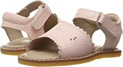 Elephantito Classic Sandal w/ Scallop (Toddler/Little Kid)
