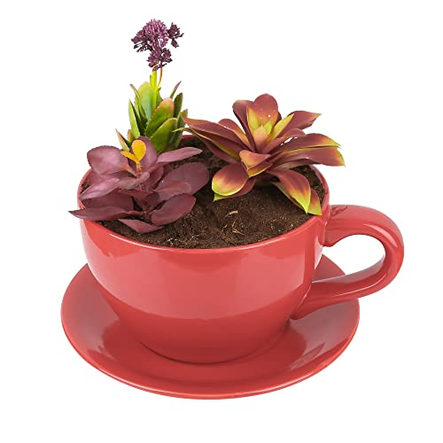 Cup And Saucer Planter Amazon Co Uk
