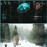 冬の壁紙 HD - Fuyu no kabegami HD