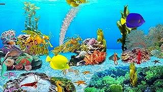 Sea Dragons Aquarium [Download]