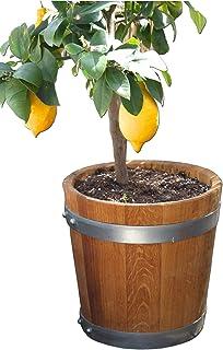 Nouveau fabriqué tonneau, banneau, bac à fleurs, jardinière, fût de chêne - en bois massif de chêne huilé (D30 H30 huilé)