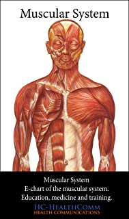 Muscular System, e-chart.: The more complete Muscular System