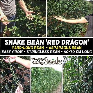 Snake Bean Red Dragon 10 Seeds Heirloom Climbing Asian Vegetable Long Beans
