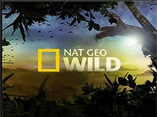 nat geo wild tv