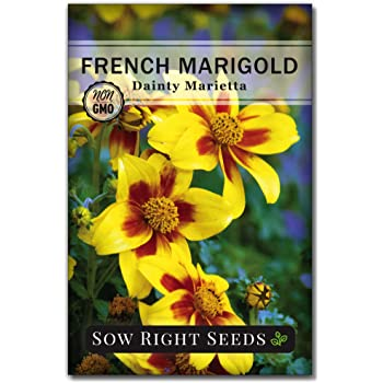 Sow Right Seeds - Dainty Marietta Marigold Seeds for Planting, Beautiful to Plant in Your Flower Garden; Non-GMO Heirloom Seeds; Wonderful Gardening Gift (1)