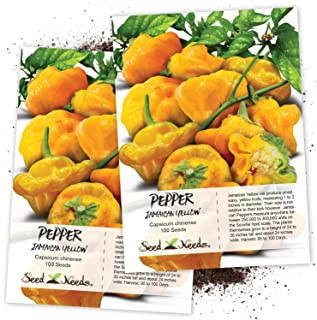 Seed Needs, Jamaican Yellow Pepper (Capsicum annuum) Twin Pack of 100 Seeds Each Non-GMO