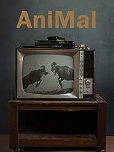 rent a ram animal